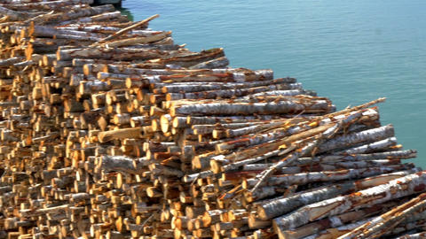 Heap of pulpwood for fire on display on the harbou Footage