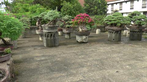 Bonsai Plants stock footage