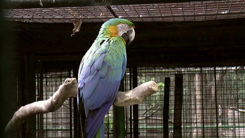 catalina macaw bird Stock Video Footage