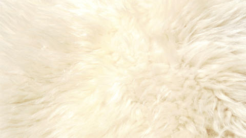 A lambskin or fur that is white in color GH4 4K UH Stock Video Footage