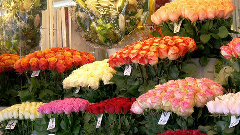 Colorful tulips displayed on the flower shop GH4 4 Footage
