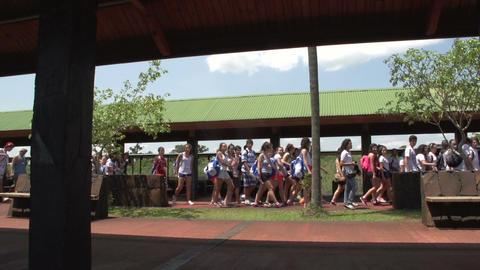 005 Schoolchildren passing by Stock Video Footage