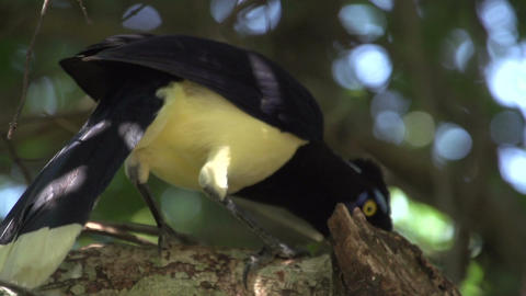 014 Colourfull bird in tree Stock Video Footage