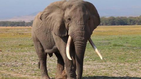 Elephants. 0