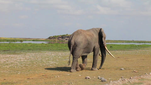 Elephants. 1