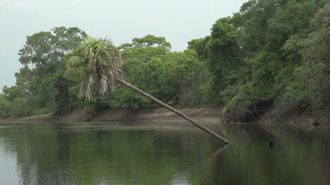032 Pantanal , boating on the river , slowmotion Stock Video Footage
