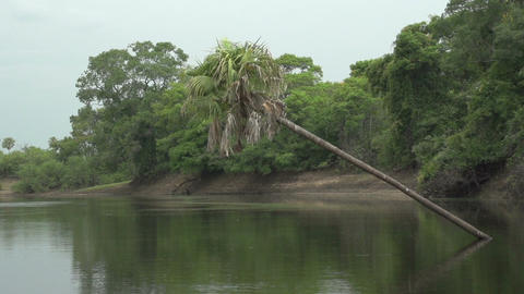 032 Pantanal , boating on the river , slowmotion Footage