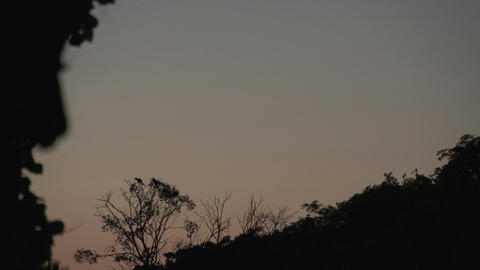 050 Pantanal , sunset , macaw ( Ara chloropterus ) Stock Video Footage