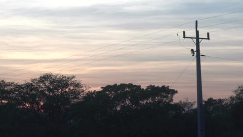 051 Pantanal , sunrise , landscape , electricity p Stock Video Footage