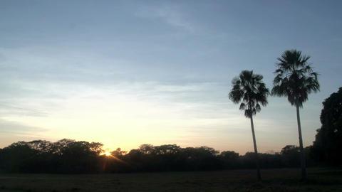 053 Pantanal , sunrise , landscape , palmtrees Footage