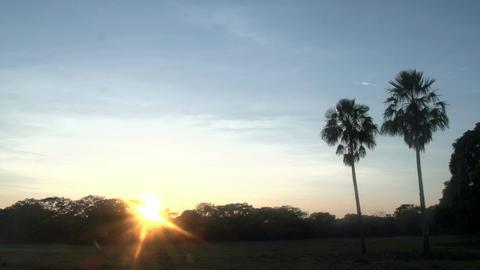 053 Pantanal , sunrise , landscape , palmtrees Stock Video Footage