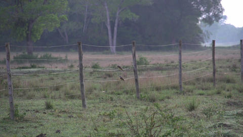 054 Pantanal , sunrise , landscape , birds on a fe Stock Video Footage