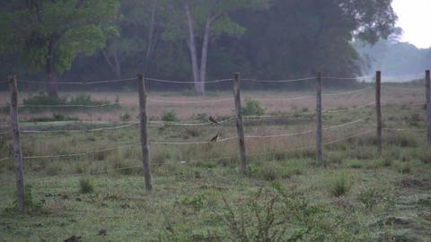 055 Pantanal , sunrise , landscape , birds on a fe Footage