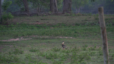056 Pantanal , sunrise , landscape , bird make sou Stock Video Footage