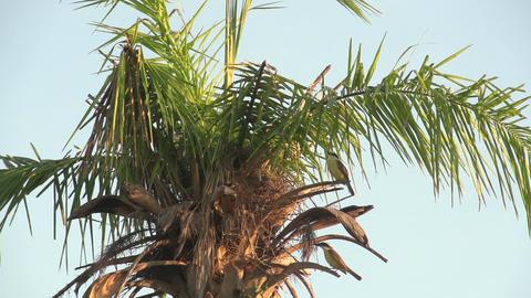 060 Pantanal , sunrise , birds protecting there ne Footage