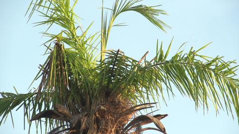 061 Pantanal , sunrise , palmtree at blue sky , cl Footage