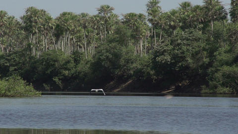 071 Pantanal , boating on the river , bird flies i Footage