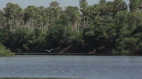 071 Pantanal , boating on the river , bird flies i Stock Video Footage