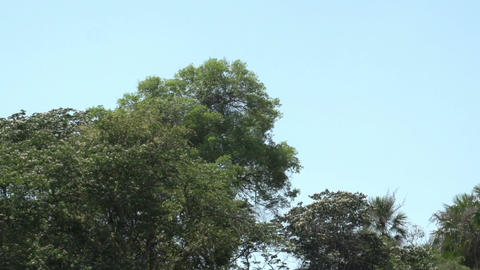 075 Pantanal , boating on the river , bleu sky Stock Video Footage