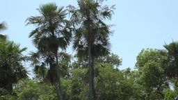 076 Pantanal , boating on the river , bleu sky Footage