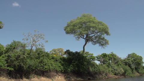 077 Pantanal , boating on the river , bleu sky Footage