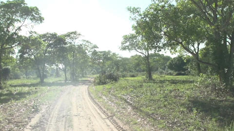 0126 Pantanal , Drive with truck through landscape Footage