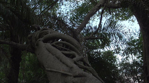 0133 Pantanal , inside a strange tree Stock Video Footage