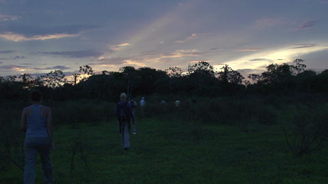 0139 Pantanal , group of tourists walking in wood  Footage
