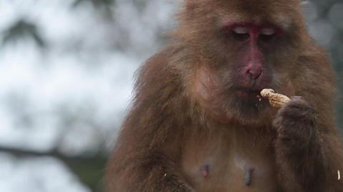 Monkey HD Stock Video Footage