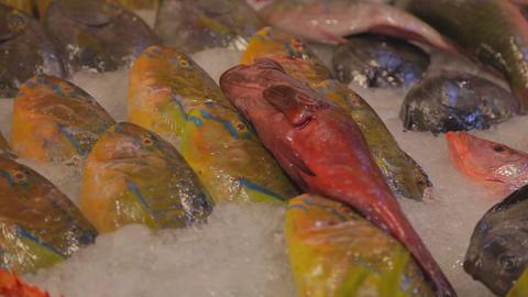 macro of fish at kenting fish market Stock Video Footage