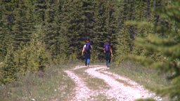 HD2008-6-9-3 hikers on trail Stock Video Footage