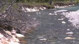 HD2008-6-9-11 mountain stream Stock Video Footage