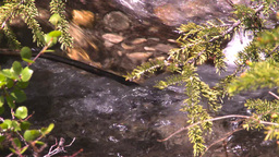 HD2008-6-9-27 tiny mountain stream Stock Video Footage