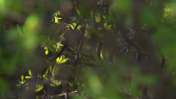 HD2008-6-9-29 tiny mountain stream reflections Stock Video Footage