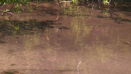 HD2008-6-9-31 tiny mountain stream reflections Stock Video Footage