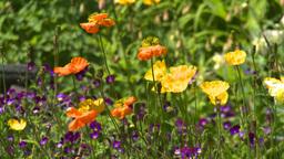 HD2008-6-9-41 flowers Stock Video Footage