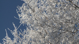 HD2008-3-1-20 hoar frost tree zoom back Stock Video Footage