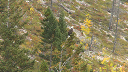 HD2008-10-1-56 lake boat ride autumn colors eagle Stock Video Footage