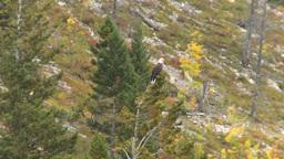 HD2008-10-1-56 lake boat ride autumn colors eagle Stock Video Footage
