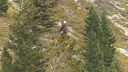 HD2008-10-1-56 lake boat ride autumn colors eagle Footage