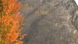 HD2008-10-1-62 lakeshore autumn colors Stock Video Footage