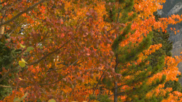 HD2008-10-1-64 shore autumn colors Stock Video Footage