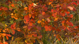 HD2008-10-1-66 shore autumn colors Stock Video Footage