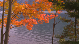 HD2008-10-1-68 lakeshore autumn colors Footage