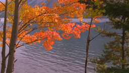 HD2008-10-1-68 lakeshore autumn colors Stock Video Footage