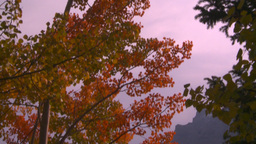 HD2008-10-1-70 lakeshore autumn colors Stock Video Footage