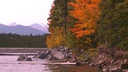 HD2008-10-1-78 lakeshore autumn colors Footage