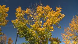 HD2008-10-1b-5 autumn trees Footage