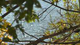 HD2008-10-1b-9 river trees rack focus Stock Video Footage