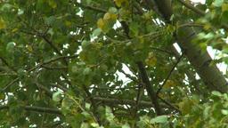 HD2008-10-1b-15 wind trees Stock Video Footage